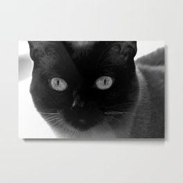 Siamese cat face, black and white animal photography Metal Print