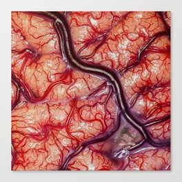 Visceral entrapment Canvas Print