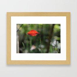 Red Leaf Caught Framed Art Print