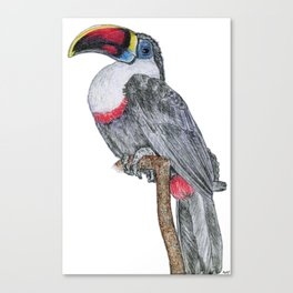 Perching Toucan Canvas Print