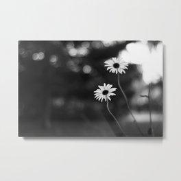Through the daisies Metal Print