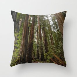 Redwood Forest Adventure VII - Nature Photography Throw Pillow