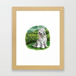 Sheepdog Framed Art Print