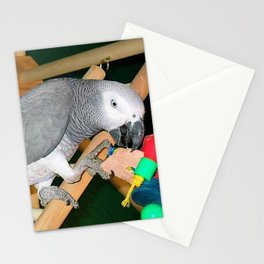 Doobie the parrot Stationery Cards