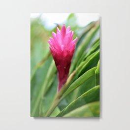 Blooming Pink Ginger Metal Print