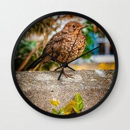 Juvenile Blackbird Resting Wall Clock