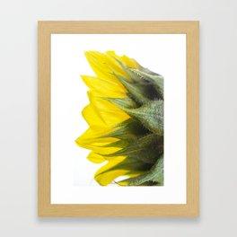 Sunflower IV Framed Art Print