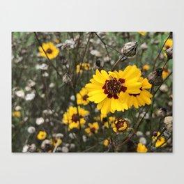 Wild Daises Canvas Print