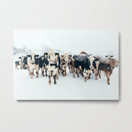 Cows in Winter on a Farm Metal Print