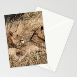 Camouflaged African Male Lions of the Kalahari Desert Stationery Cards