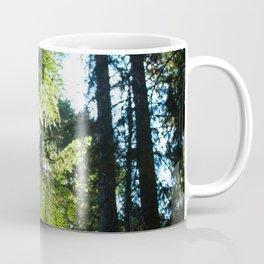 Sunlit Evergreen Branch Photography Print Coffee Mug