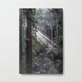 Muir Woods Crepuscular Rays Metal Print