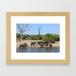 Elephant Safari Framed Art Print