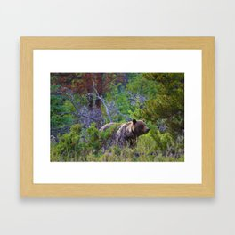 Grizzly mother watches over the area as her young cubs play nearby Framed Art Print
