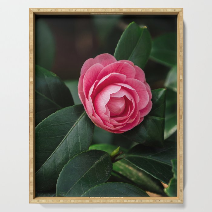 Blooming Pink Perfection Camellia Japonica Serving Tray