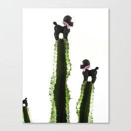 Poodle cacti Canvas Print