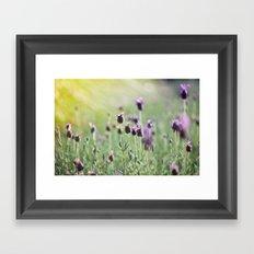 lavender in summer light Framed Art Print