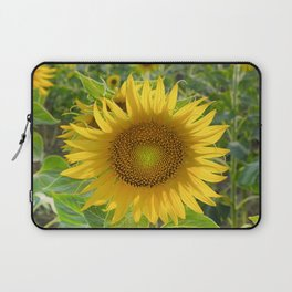 Sunflower. Summer dreams Laptop Sleeve