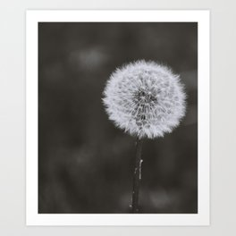 Wishes -Unplucked Art Print
