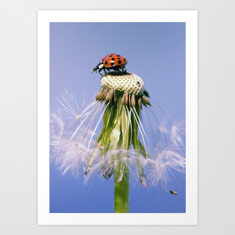 Dandelion Ladybugs Art Print By Falkofollert Society6