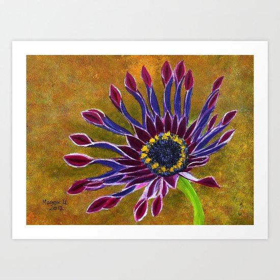 African Daisy Art Print