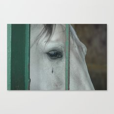 Horse....of course Canvas Print