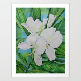 Hawaiian White Ginger Art Print