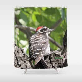 A Nuttal's Woodpecker Up a Tree Shower Curtain