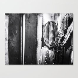 cactus with wood wall background in black and white Canvas Print
