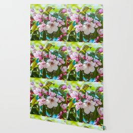 Pink apple blossom Wallpaper
