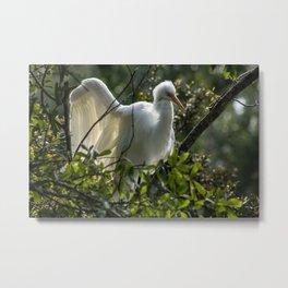 Egret Feathers Metal Print