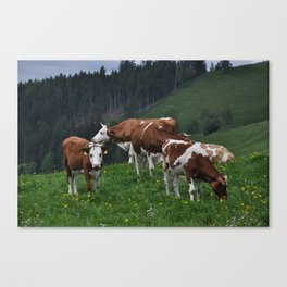 cows in suisse Canvas Print