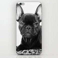 Französische Bulldogge iPhone & iPod Skin