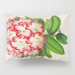 Rhododendron Madame Vintage Botanical Floral Flower Plant Scientific Illustration Pillow Sham