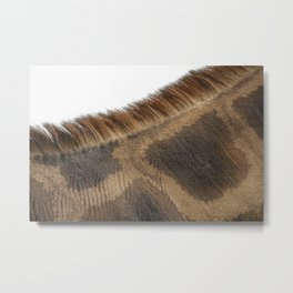 NATURE'S PATTERN OF BEAUTY Metal Print
