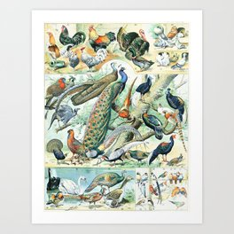 Vintage Illustration Bird Chart IV Kunstdrucke