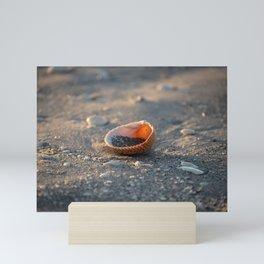 Seashells on the Shore Mini Art Print