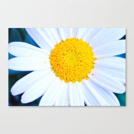 SMILE - Daisy Flower #2 Canvas Print