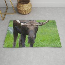Bullwinkle Bull Rug
