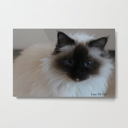 Lucy The Cat 1 Metal Print