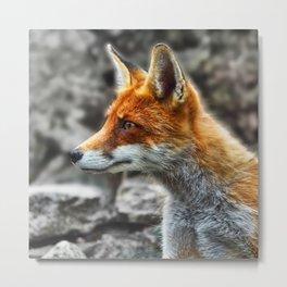 Friendly fox wildlife portrait Metal Print