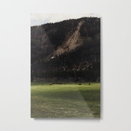 Buffalo in the Meadow Metal Print