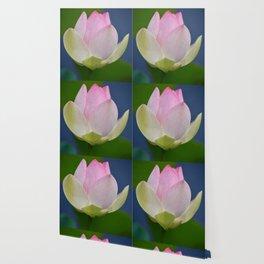 Lovely Delicate Lotus Wallpaper
