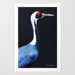 Asian White Naped Crane Art Print