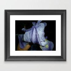 Iris After A Thunderstorm Framed Art Print