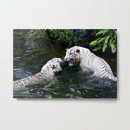 Tigers Fight Metal Print