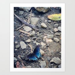 Blue butterfly Art Print