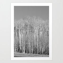 Wallof Aspen Trees Art Print