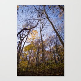 Out of the Woods | Nature Landscape Photography of Forest Yellow Leaves During Autumn Fall Canvas Print