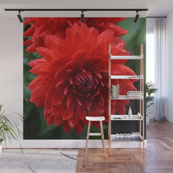 Fresh Rain Drops - Red Dahlia Wall Mural